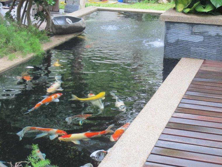 peces de agua dulce kio jardin opciones ideas
