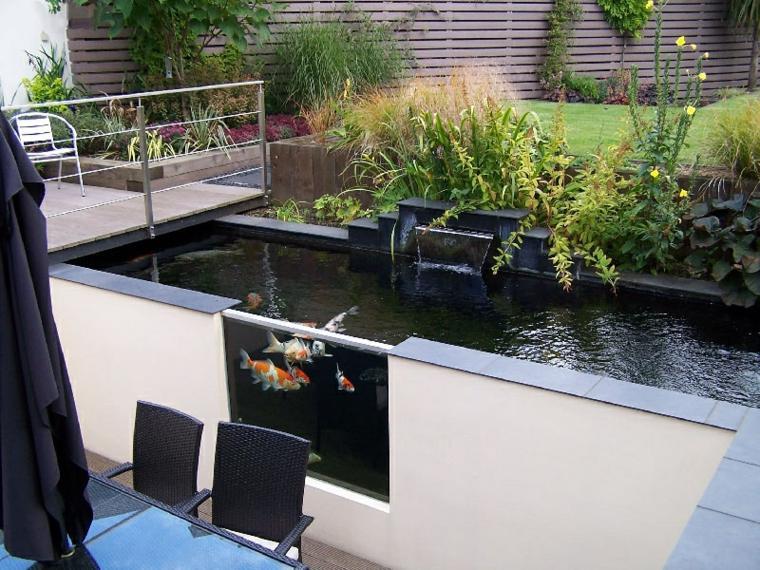 peces agua dulce kio jardin precioso ideas