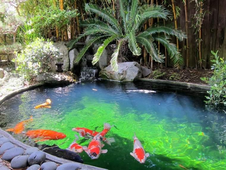 peces de agua dulce kio jardin tropical ideas