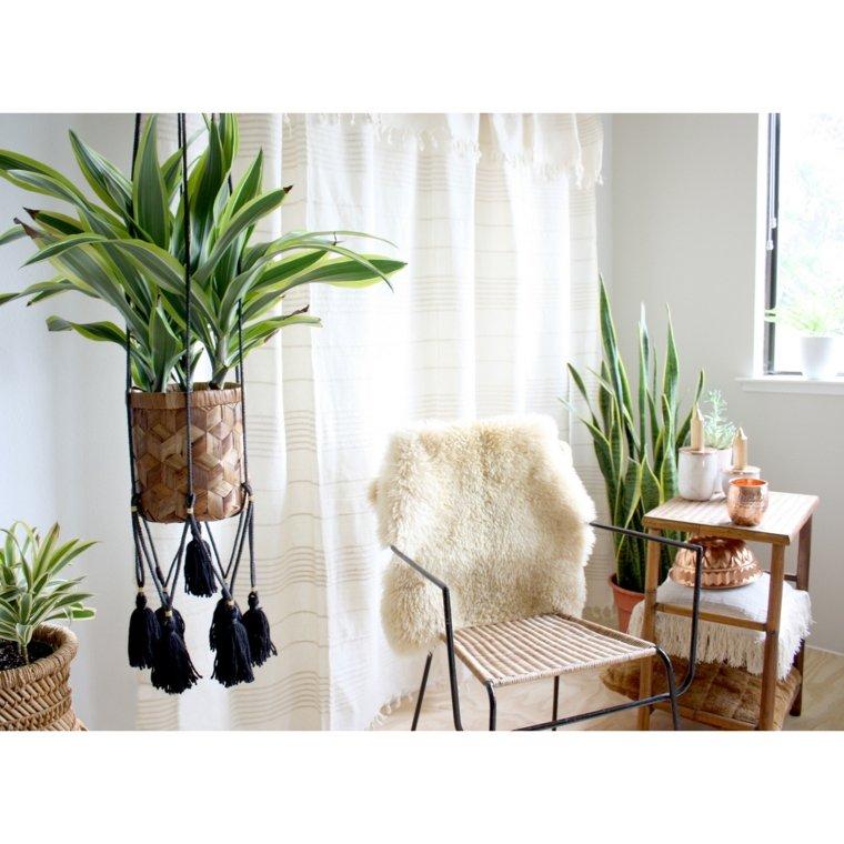 Plantas colgantes – ideas para el interior
