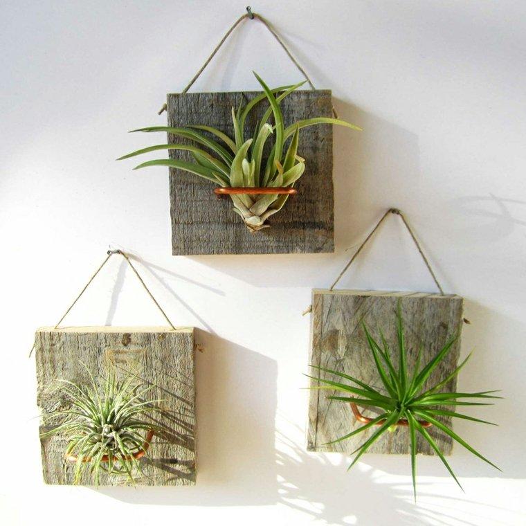 plantas colgantes originales paredes - Plantas Colgantes