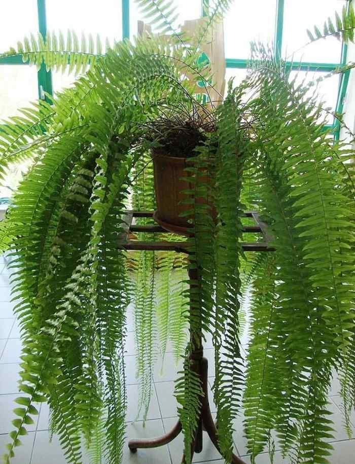 Plantas de interior resistentes varias opciones for Varias plantas en una maceta