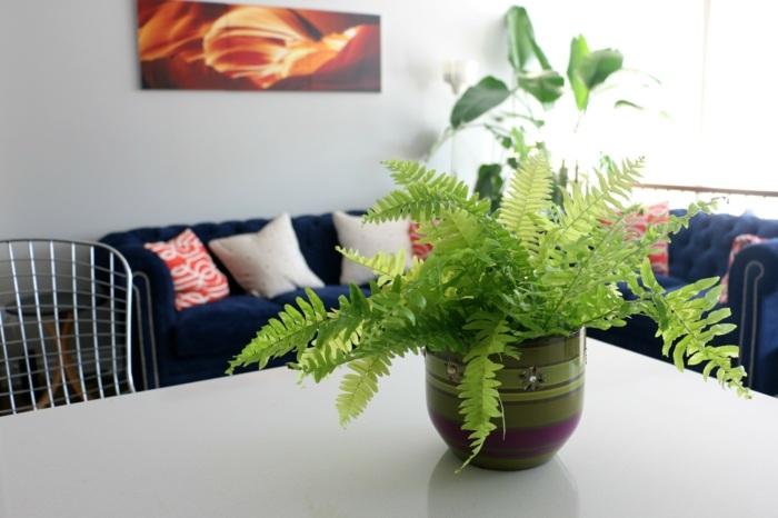 plantas de interior foto interior helecho espada mesa ifdeas