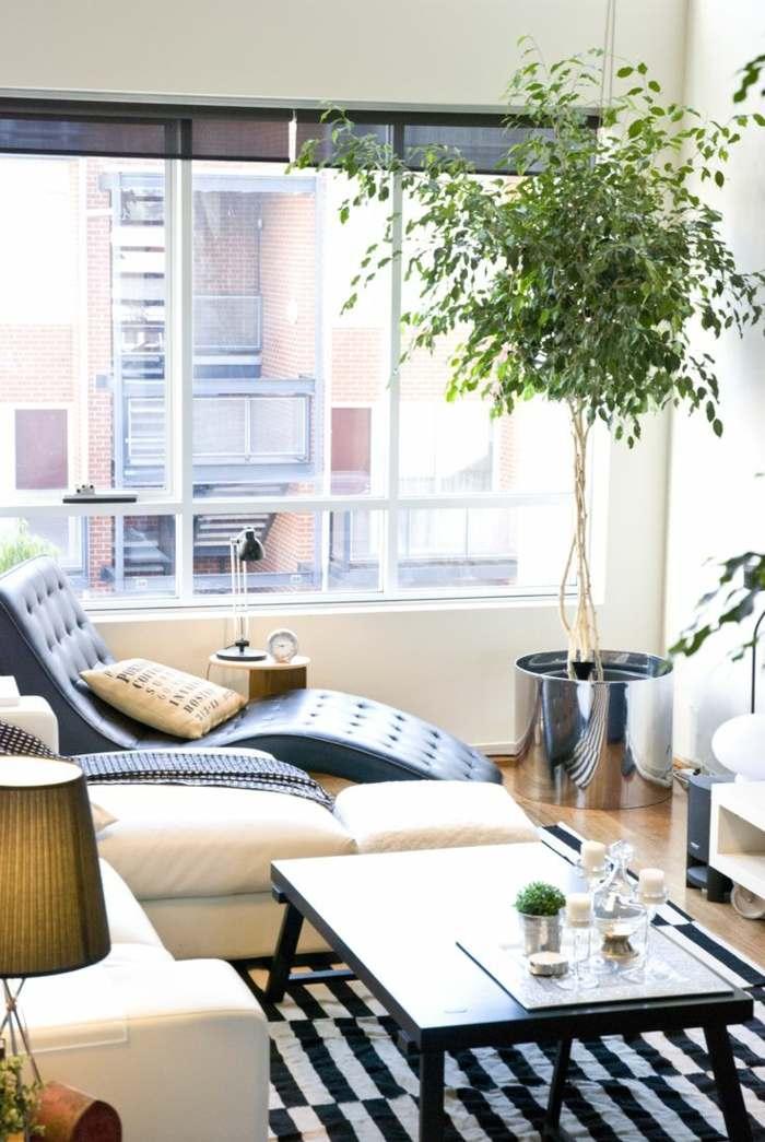 plantas de interior resistentes arbol benjamin moderno salon ideas