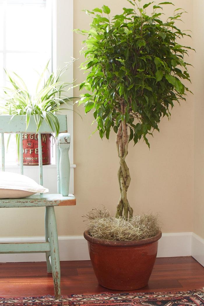 Plantas de interior resistentes varias opciones - Plantas de exterior resistentes ...