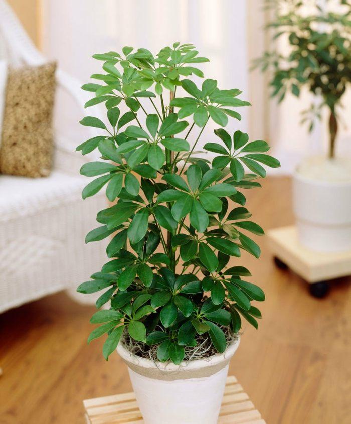 Plantas de interior resistentes varias opciones for Plantas de interior muy duraderas