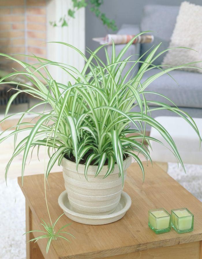 plantas de interior resistentes cintas planta ideas