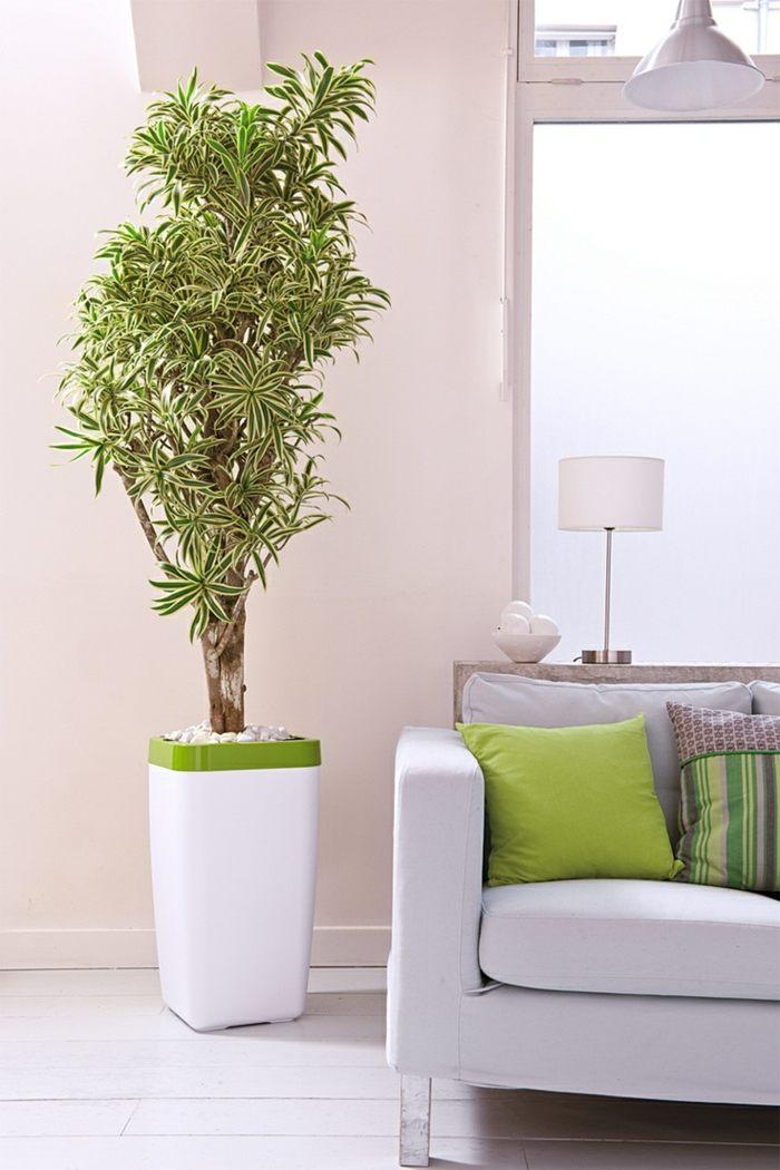 Plantas de interior resistentes varias opciones - Plantas de interior bonitas ...