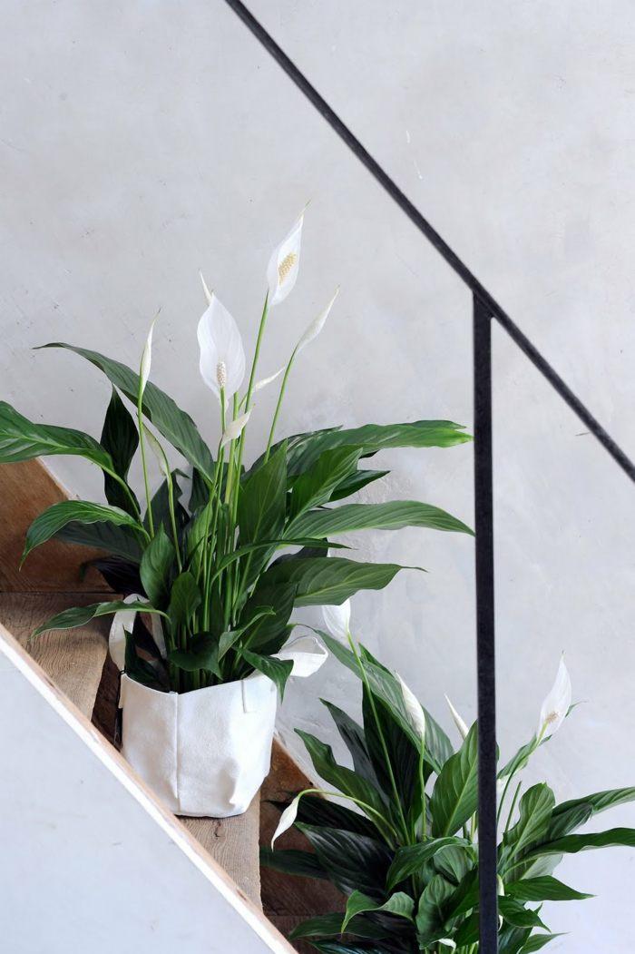 plantas de interior resistentes espatifilo precioso ideas