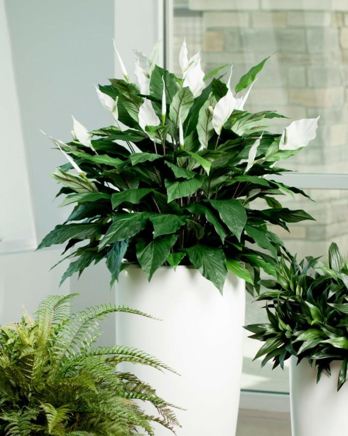 plantas de interior resistentes espatifilo ideas