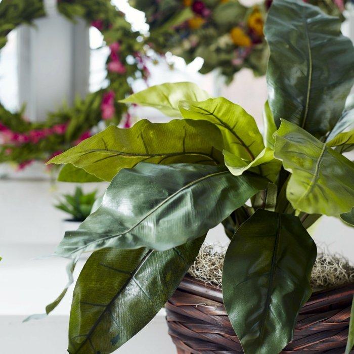 plantas-de-interior-resistentes-helecho-nido-de-ave-maceta
