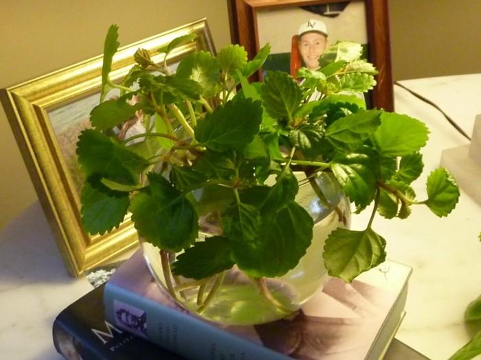 plantas-de-interior-resistentes-plantas-del-dinero-trepadoras