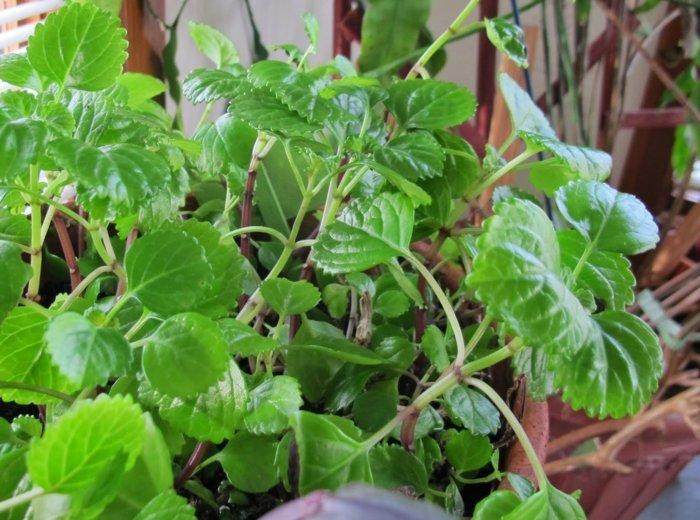 plantas de interior resistentes plantas del dinero ideas