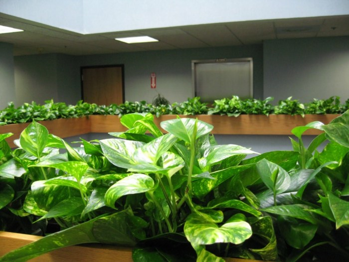 plantas de interior resistentes potos hojas grandes ideas