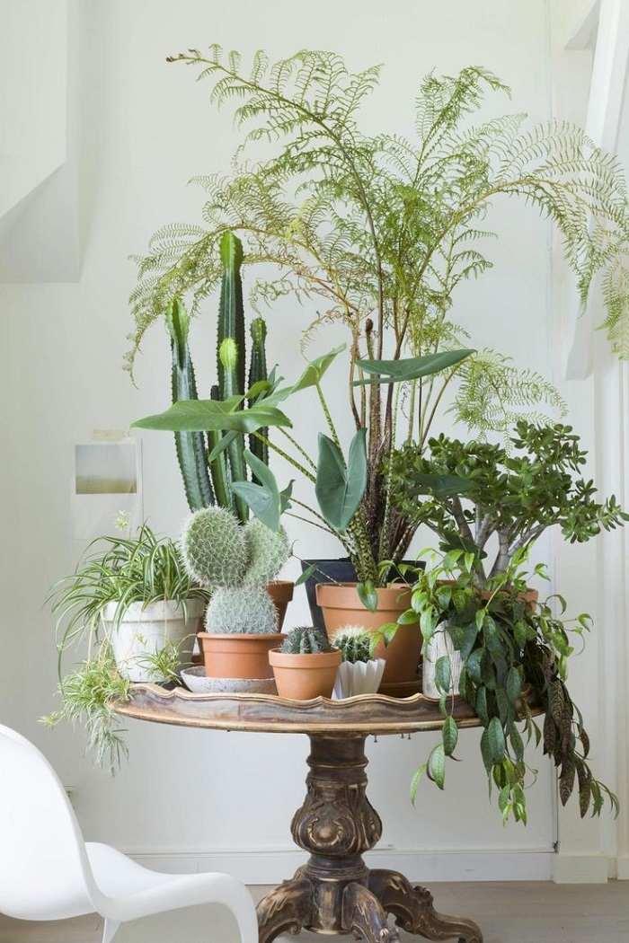 plantas decorar casa buena opcion ideas