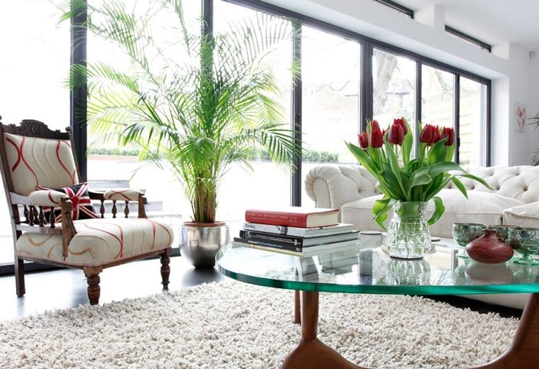 plantas para salón