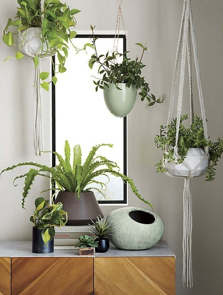 plantas y decoración interior