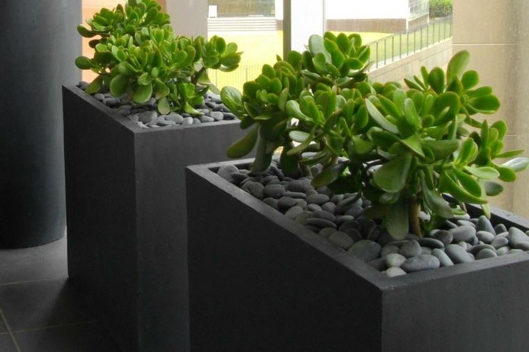 terraza con plantas verdes