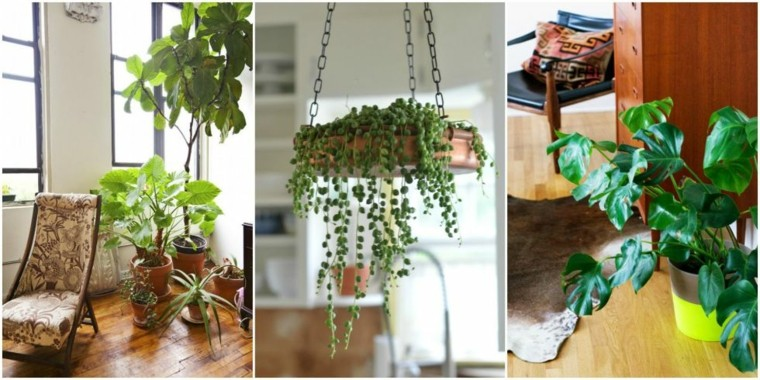 terrazas decoradas con plantas ideas originales