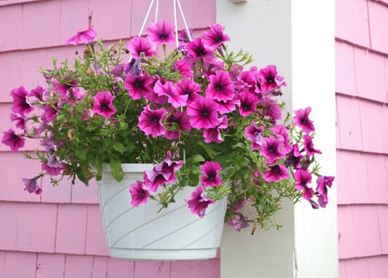 terrazas decoradas con plantas verano