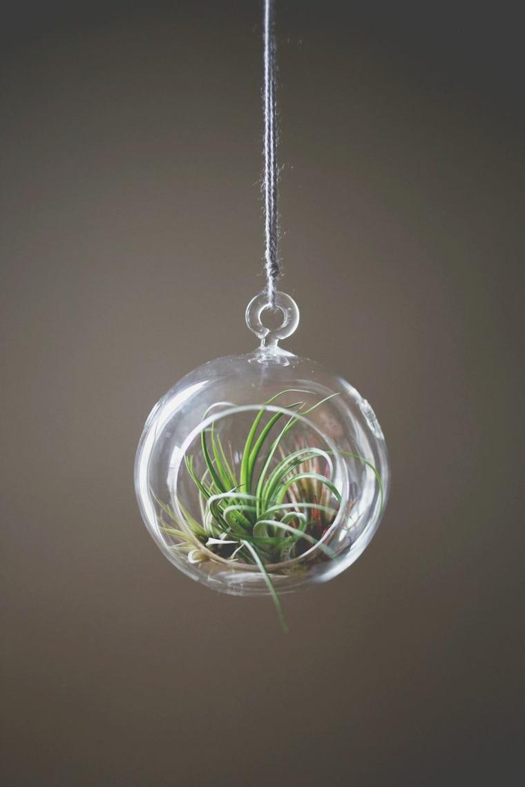 bola colgante vidrio plantas