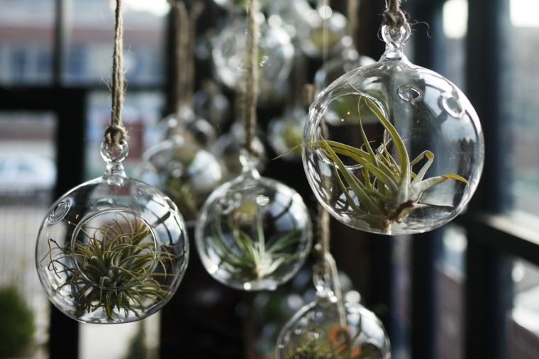 bolas colgantes plantas aire