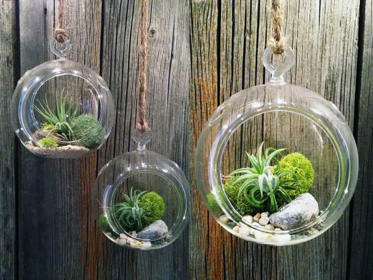 estupendas bolas colgantes plantas
