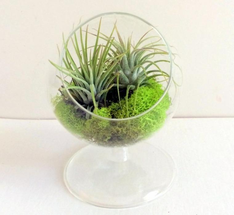 original urna vidrio plantas