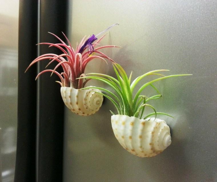 Plantas de aire - tipos e ideas de decoración -