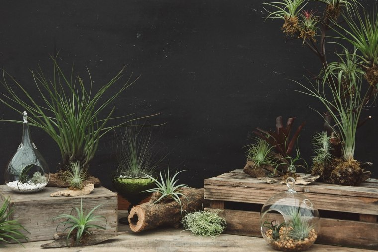 originsales ideas decoracion plantas