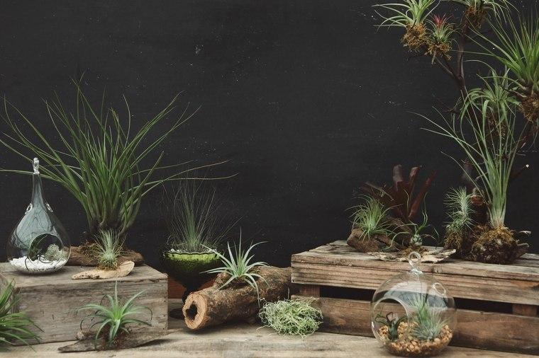 originsales ideas decoracion plantas
