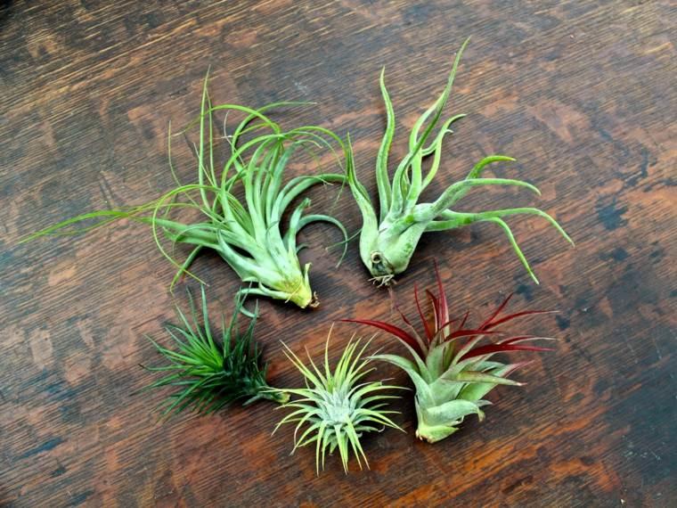 planta originales decorativas