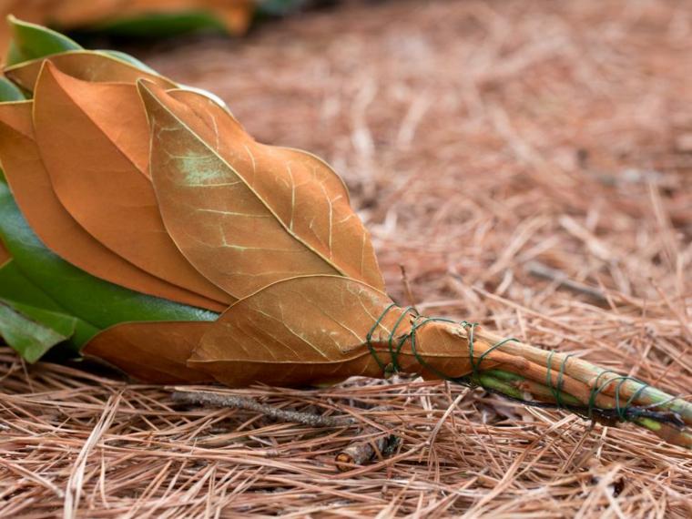 rama varias hojas magnolia colores