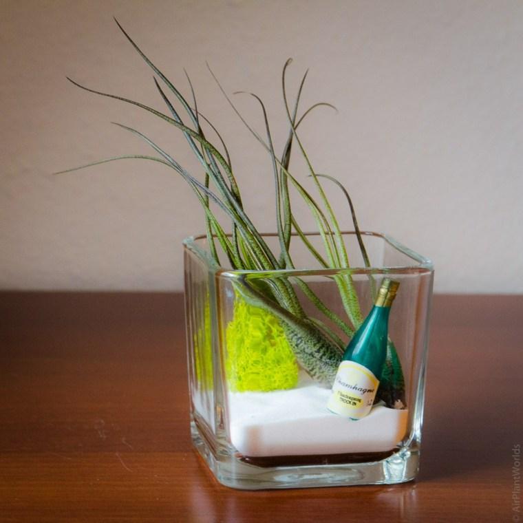 vaso vidrio planta aire
