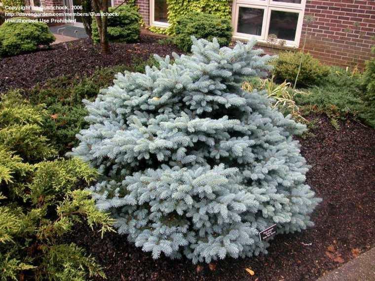 Rboles de jard n para colorear el exterior for Aspiradora de hojas de jardin