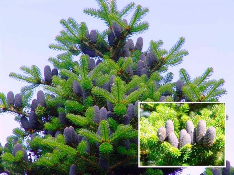 Rboles de jard n para colorear el exterior for Arboles frutales de hoja perenne