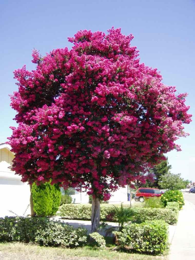 Rboles de jard n para colorear el exterior for Arboles frutales para jardin
