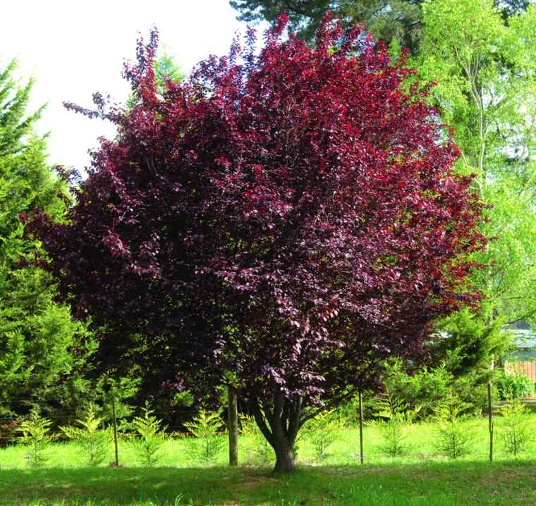 Rboles de jard n para colorear el exterior for Arbol del fuego jardin