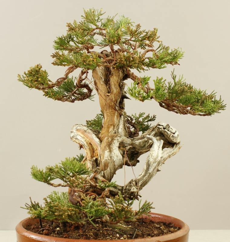 árboles de jardín interior