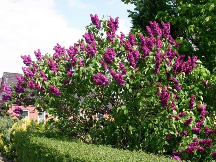 Rboles de jard n para colorear el exterior for Jardin lilo