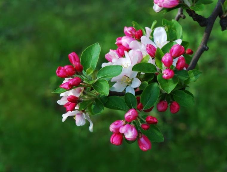 árboles frutales para jardín