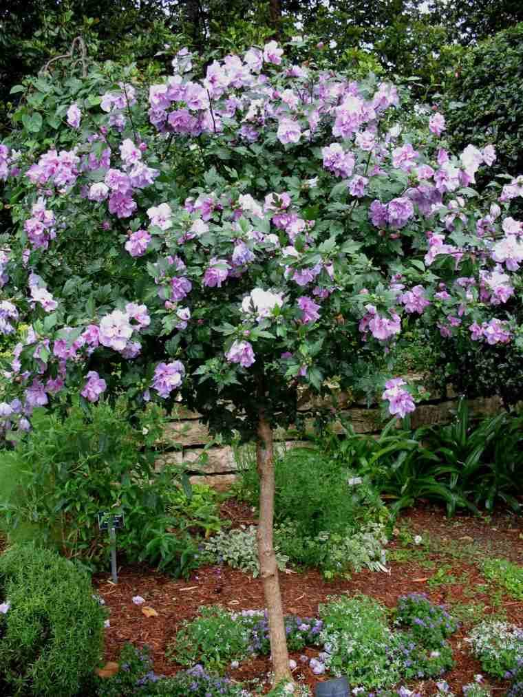 Rboles de jard n para colorear el exterior for Arboles ornamentales para jardin