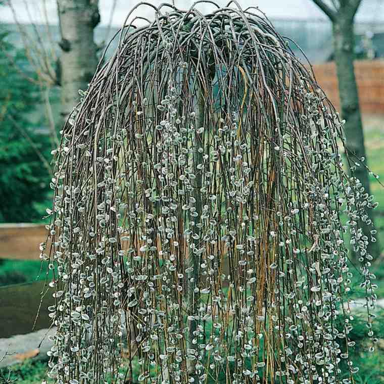 Rboles de jard n para colorear el exterior - Arboles para jardines pequenos ...
