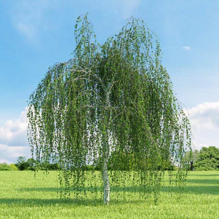 árboles ornamentales para jardín decorar