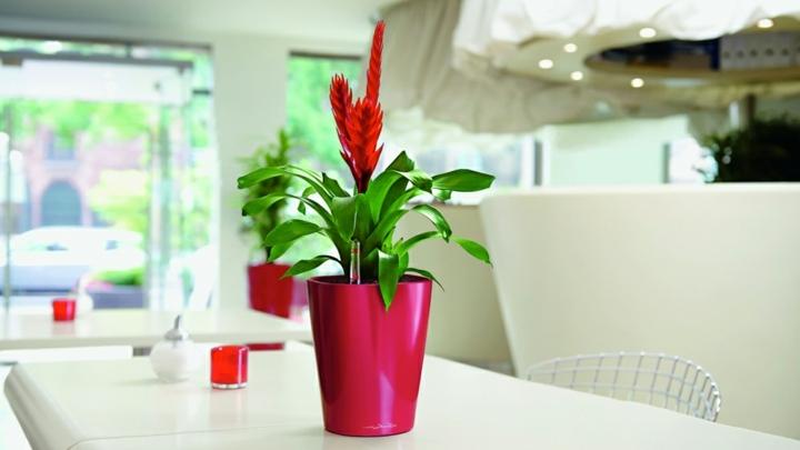 centro mesa rosa especiales blanco
