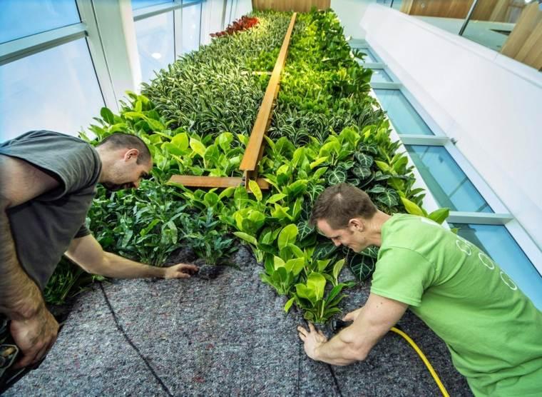 colocar plantas fachada pared verde
