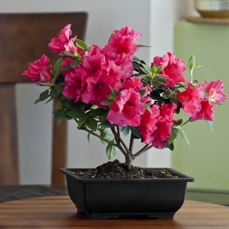 flores de interior decorar