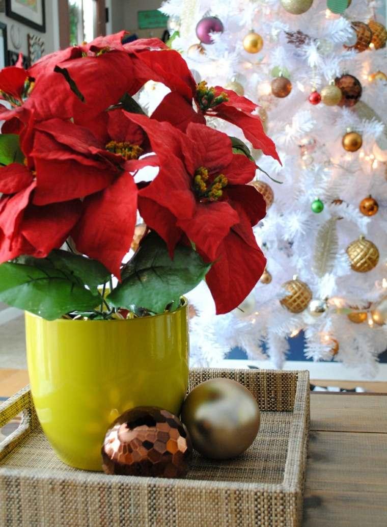 flores macetas tipicas plantas navidad diseno ideas
