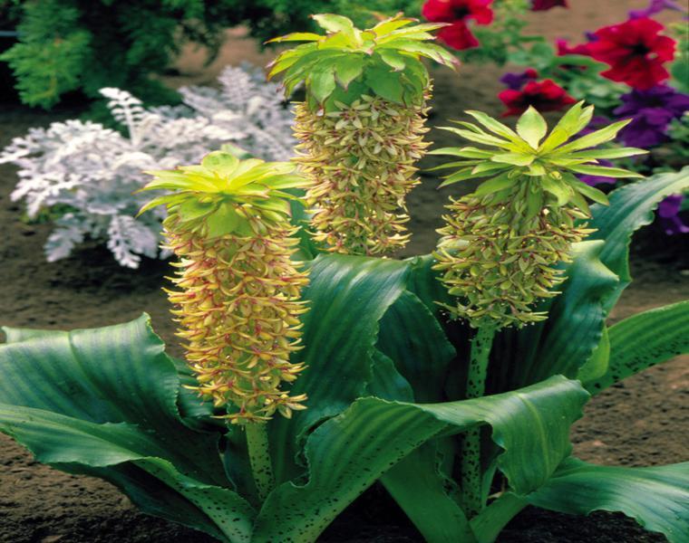 flores originales forma piña