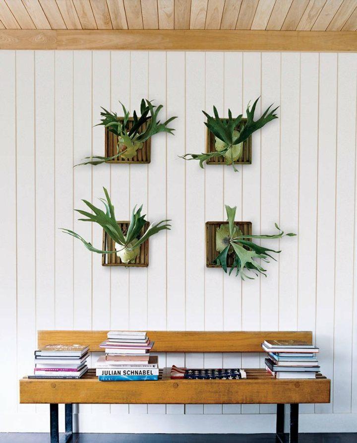 fotos de plantas imagenes madera colores
